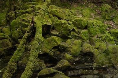 赤目四十八滝の苔