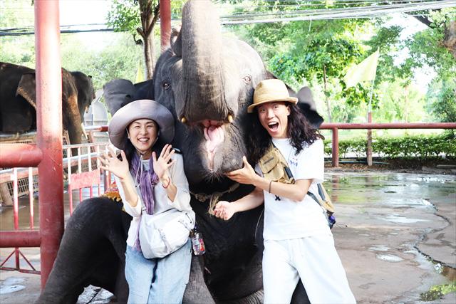 象は、自由を奪われたのか、それとも・・・